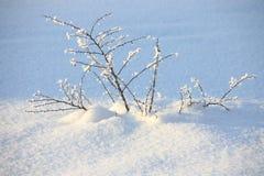 Winter Background  : snow covered tree  - Stock photos Stock Photos