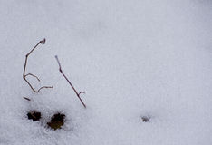 Winter background. Snow, grass, etc. royalty free stock photography