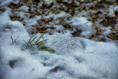 Winter background. Snow, grass, etc. Royalty Free Stock Photo