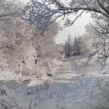 Winter background with snow Royalty Free Stock Photos
