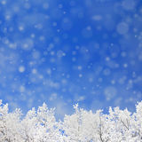 Winter background with snowfal and trees Stock Image