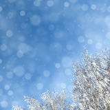 Winter background with snowfal and trees Royalty Free Stock Photos
