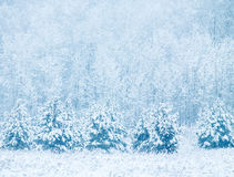 Winter background with snowfall and trees Stock Photos