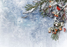 Winter background with snowy berries and bullfinch. with place f Stock Images