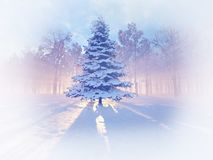 Winter background with snowy fir tree. Morning winter forest stock photography