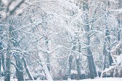 Winter background landscape view Royalty Free Stock Photos