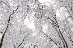 Winter background of snowy tree branches against sky. Trees covered with snow. stock image