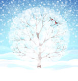 Winter background with snowy tree and bullfinches. Beautiful winter background with blue skies, snowy tree and two bullfinches Royalty Free Stock Image