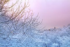 Winter background with snowy trees. Beautiful winter landscape with trees covered with snow in park and sunrise. royalty free stock photography