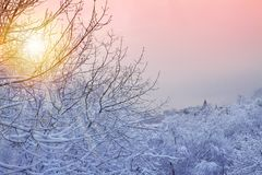 Winter background with snowy trees. Beautiful winter landscape with trees covered with snow in park during sunrise. royalty free stock photos