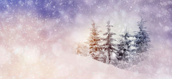 Winter background with snowy trees and snowflakes Royalty Free Stock Photos