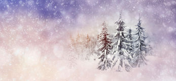 Winter background with snowy trees and snowflakes Stock Photography