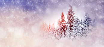 Winter background with snowy trees and snowflakes Royalty Free Stock Photo