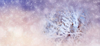 Winter background with snowy trees and snowflakes Royalty Free Stock Photography
