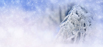 Winter background with snowy trees and snowflakes Royalty Free Stock Image