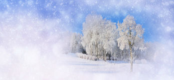 Winter background with snowy trees and snowflakes Royalty Free Stock Images