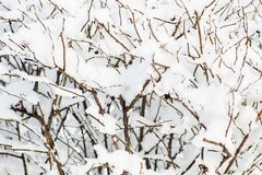 Trees and bushes in the snow. Winter background. Trees and bushes in the snow Stock Photos
