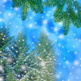 winter background - trees covered with snow Royalty Free Stock Photography