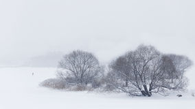 Winter background. Trees uder snow. Royalty Free Stock Image