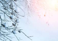 Winter background in warm tones. Beautiful landscape, Winter background in warm tones Stock Photography