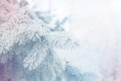Winter background - white frosty fir branch Stock Photos
