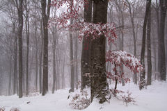 Winter backgroung Stock Photography