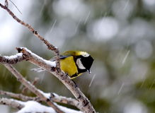 In winter bad weather. Bird sitting on a tree branch in the evening Stock Images