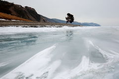 Winter Baikal. Ice field near a deserted lake shore with lonely pine Royalty Free Stock Photography