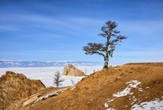 Tree of desires on shore of frozen lake Baikal royalty free stock images