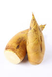 Winter bamboo shoots Royalty Free Stock Images