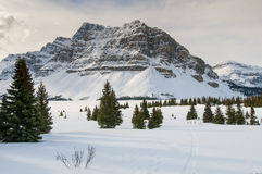 Winter in Banff National Park. Bow Lake in winter, Banff National Park Alberta Canada Stock Image