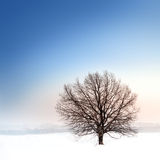 Winter bare tree Stock Image