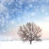 Winter bare tree and snowfall Royalty Free Stock Images