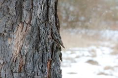 Winter Bark Stock Photography
