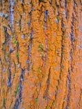 Winter bark Royalty Free Stock Image