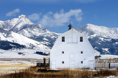 Winter Barn. A large, white barn in Montana after a snowfall Royalty Free Stock Photo