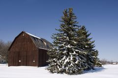 Winter Barn Pine Tree Scene. Wintertime barn scene with snow covered pine trees Royalty Free Stock Photos