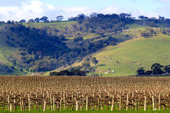 Winter in the Barossa Valley Royalty Free Stock Images