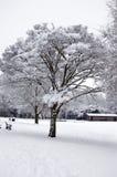 Winter-Baum Lizenzfreies Stockbild