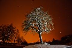 Winter-Baum Lizenzfreie Stockfotos