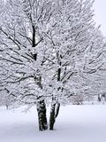 Winter-Baum stockfoto