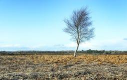 Winter-Baum Stockbilder