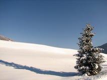 Winter-Baum stockfotografie