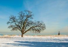 Winter-Baum einzeln aufgeführt Lizenzfreies Stockfoto