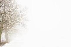 Winter-Baum im Nebel Stockfoto