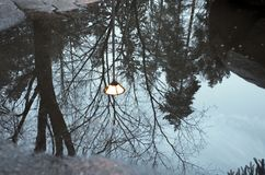 Winter-Baum-Reflektieren Stockbilder