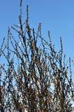 Winter-Baumaste im Morgensonnenschein Stockbild