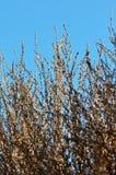 Winter-Baumaste im Morgensonnenschein Stockbilder