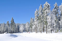 Winter,bavarian Forest,Germany Stock Image