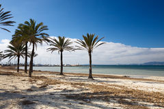Winter beach. Beach with palm trees in the winter, harbour on the background, Arenal, Mallorca, Balearic Islands, Spain Stock Photos